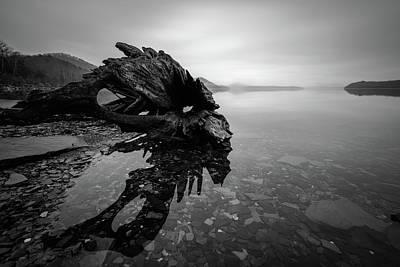 Photograph - Old Driftwood by Michael Scott