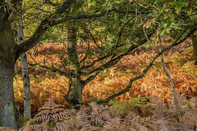 Catch Of The Day - Old English Oak by Ed James
