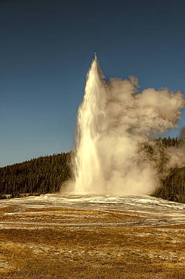 Photograph - Old Faithful by Maria Coulson