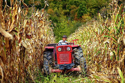 Tiller Photograph - Old Farmer Driving The Tractor In The Cornfield by Catalin Petolea