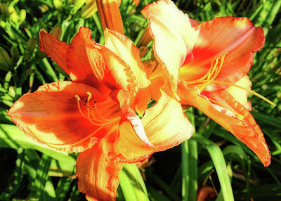 Photograph - Old Fashioned Orange Lily by Denise Beverly
