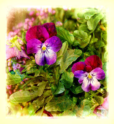 Photograph - Old-fashioned Pansies by Judi Bagwell