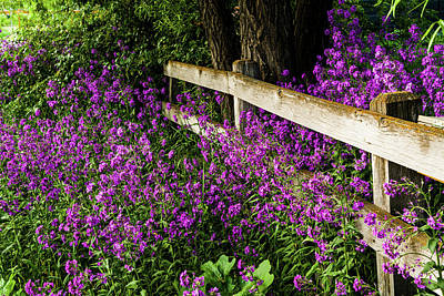 Photograph - Old Fence And Purple Flowers by TL Mair
