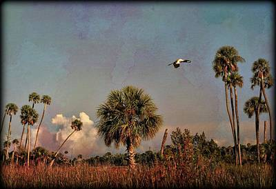 Photograph - Old Florida Waccasassa by Sheri McLeroy