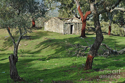 Photograph - Old Forgotten Cottage In Monsanto by Angelo DeVal