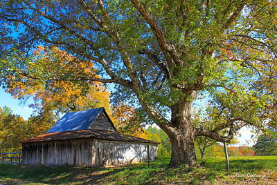 Fall Scenes Photograph - Old Friends Rustic Barn Majestic Oak Tree Art by Reid Callaway