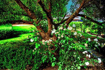 Photograph - Old Garden Tree by Rick Bragan