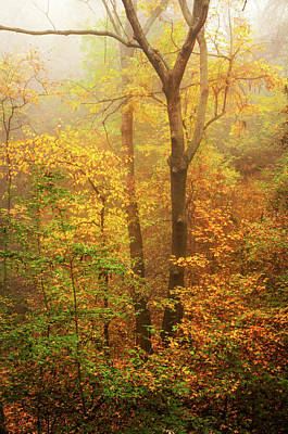 Photograph - Old Gold Of Autumnal Forest by Jenny Rainbow