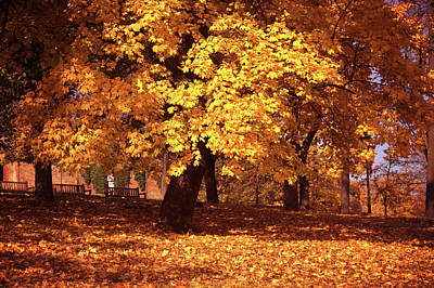 Photograph - Old Gold Of Fall by Jenny Rainbow