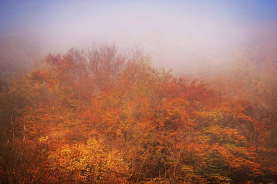 Photograph - Old Gold Of The Autumn Trees In Mist by Jenny Rainbow