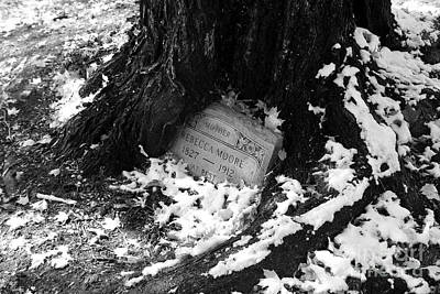 Old Grave Embraced By Ancient Oak Art Print by Arni Katz