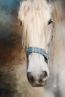 Art Print featuring the photograph Old Grey by Robin-Lee Vieira