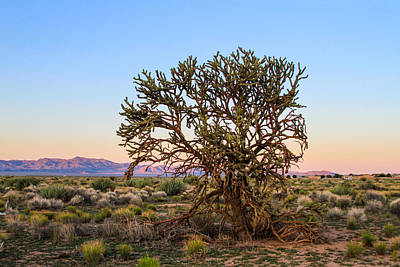 Old Growth Cholla Cactus View 2 Art Print