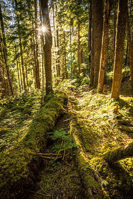 Photograph - Old Growth Forest In The North Cascades by Serge Skiba