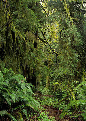Photograph - Old Growth Forest by Robert Potts