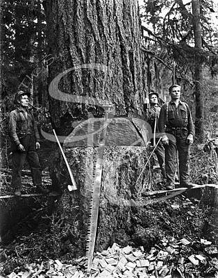 Photograph - Old Growth Loggers by Darius Kinsey