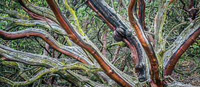 Photograph - Old-growth Manzanita by Alexander Kunz