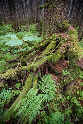 Photograph - Old Growth by Tim Newton