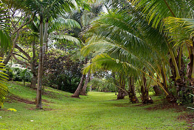 Photograph - Old Hawaiian Garden by Roger Mullenhour