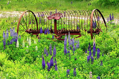 Photograph - Old Hay Rake And Lupines by Gary Corbett