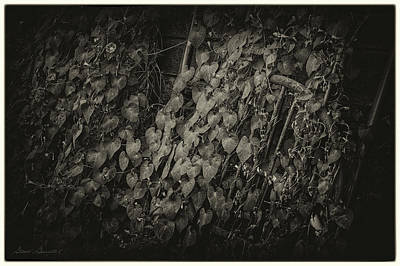 Photograph - Old Headboards And Vines On A Wall by Glenn Gemmell