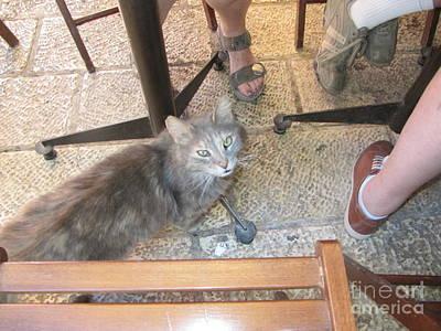 Photograph - Old Jerusalem Market Cat #1 by Donna L Munro