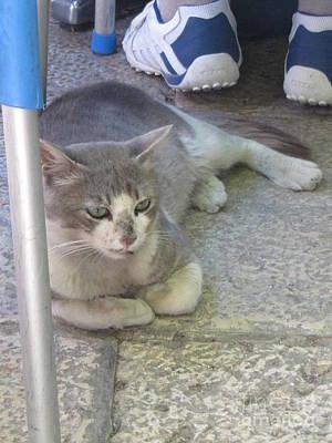 Photograph - Old Jerusalem Market Cat #2 by Donna L Munro