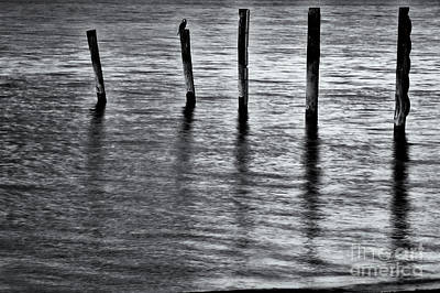 Photograph - Old Jetty - S by Werner Padarin