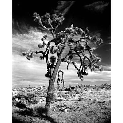 Fineart Wall Art - Photograph - Old Joshua Tree At Sunset. This Is One by Alex Snay