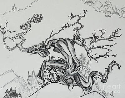Drawing - Old Juniper Dancing With The Wind -- Field Sketch by Dawn Senior-Trask