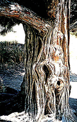 Photograph - Old Juniper Tree On The Bank Of The Colorado River by Merton Allen