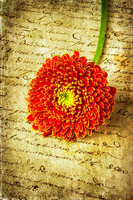 Photograph - Old Letter And Orange Daisy by Garry Gay