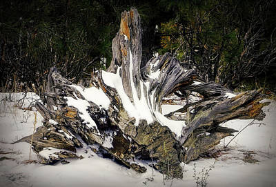 Photograph - Old Logs by Elaine Malott