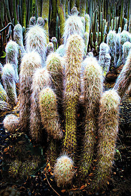 Photograph - Old Man Cactus by Joseph Hollingsworth