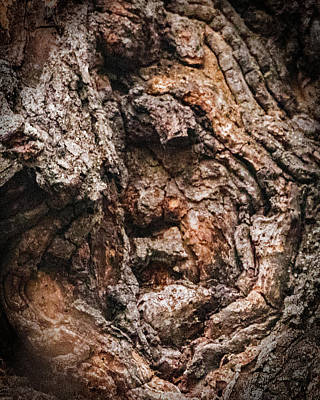 Ira Marcus Royalty-Free and Rights-Managed Images - Old Man in the Tree by Ira Marcus