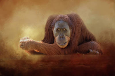 Photograph - Old Man Orangutan by Michele Wright
