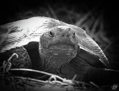 Animals Photos - Old Man Tortoise, No. 2 by Elie Wolf