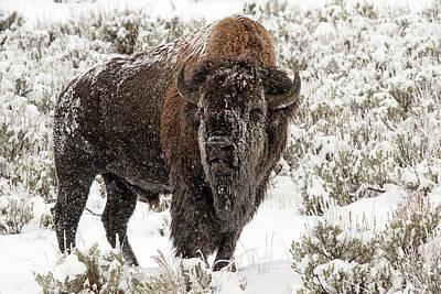 Flurries Photograph - Old Man Winter by Sandy Sisti