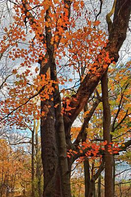 Old Maple Tree Original