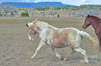 Photograph - Old Mare by Debby Pueschel