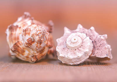 Photograph - Shell Attractions by Heidi Hermes