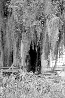 Photograph - Old Moss Down Home by Emery Graham