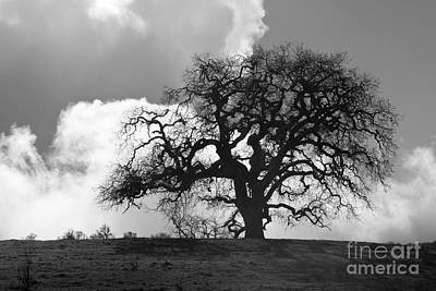 Photograph - Old Oak Against Cloudy Sky by Sharon Foelz