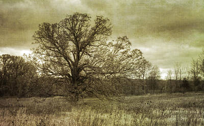 Photograph - Old Oak In The Field by Michael Colgate