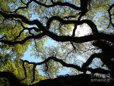 Old Oak Art Print by JoAnn Wheeler