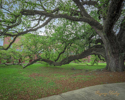 Photograph - Old Oak Tree by Gregory Daley  PPSA