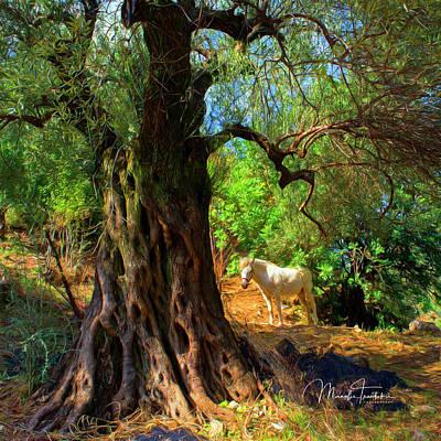 Photograph - Old Olive Tree And Horse by Manolis Tsantakis