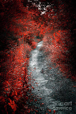 Old Path In Red Forest Art Print