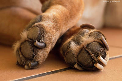 Digital Art - Old Paws 01 by Kevin Chippindall