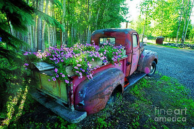 Photograph - Old Pickup Truck As Flower Bed by David Arment